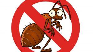 شركة رش مبيدات حشرية بالرياض 0501214920 منزلية للصراصير للناموس