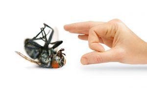 شركة مكافحة حشرات بالرياض0501214920 بالقطيف بابها بالفريش ببارق