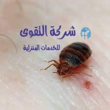 مكافحة-حشرة-البق-بالرياض