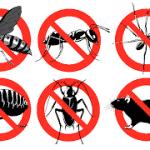 مكافحة حشرات بتبوك 0501214920 بمكة بحفر الباطن بالجبيل بضباء بالخرج