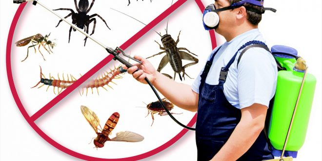 شركة مكافحة حشرات بتبوك 0501214920 بالدمام بالهفوف بالقريات بالظهران