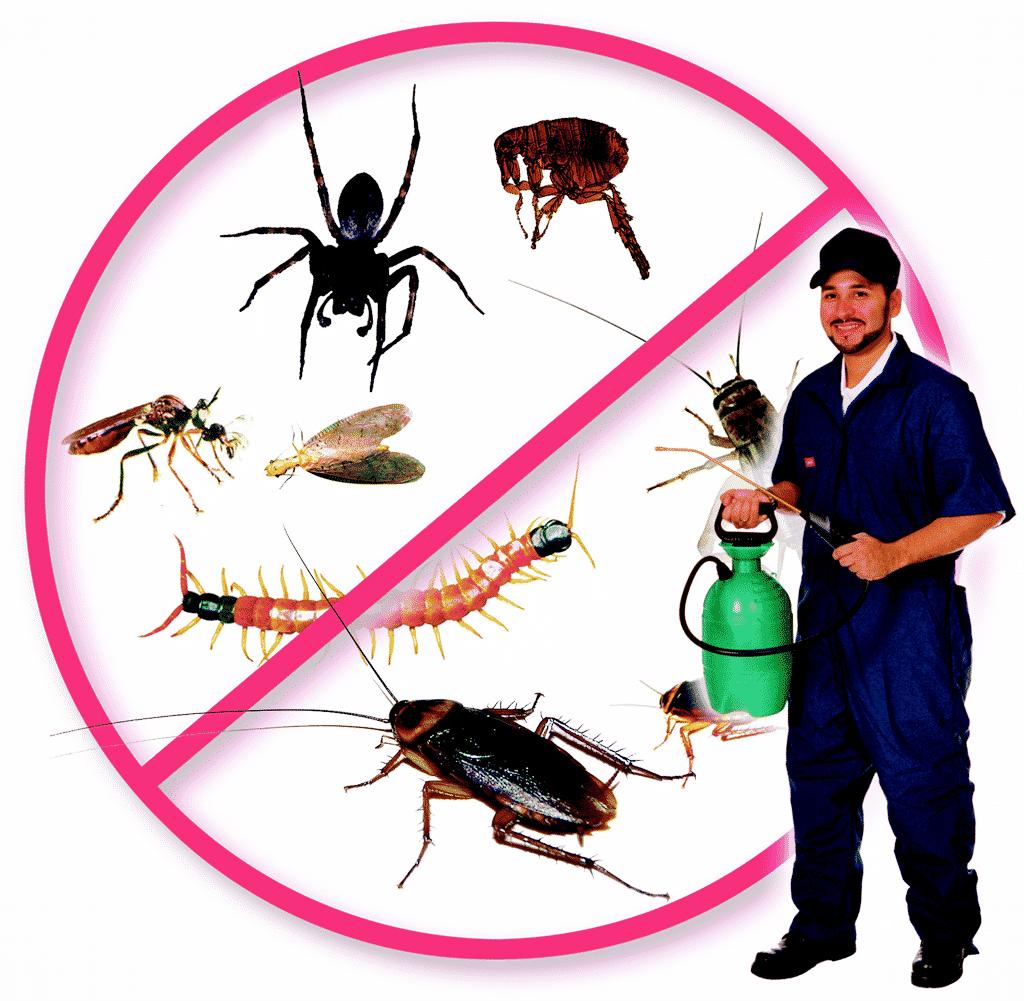 شركة مكافحة حشرات بحوطة سدير 0501214920 بالخبر بتاروت بالدوادمي