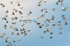 شركة-مكافحة-الطيور-و-الحمام-بالرياض